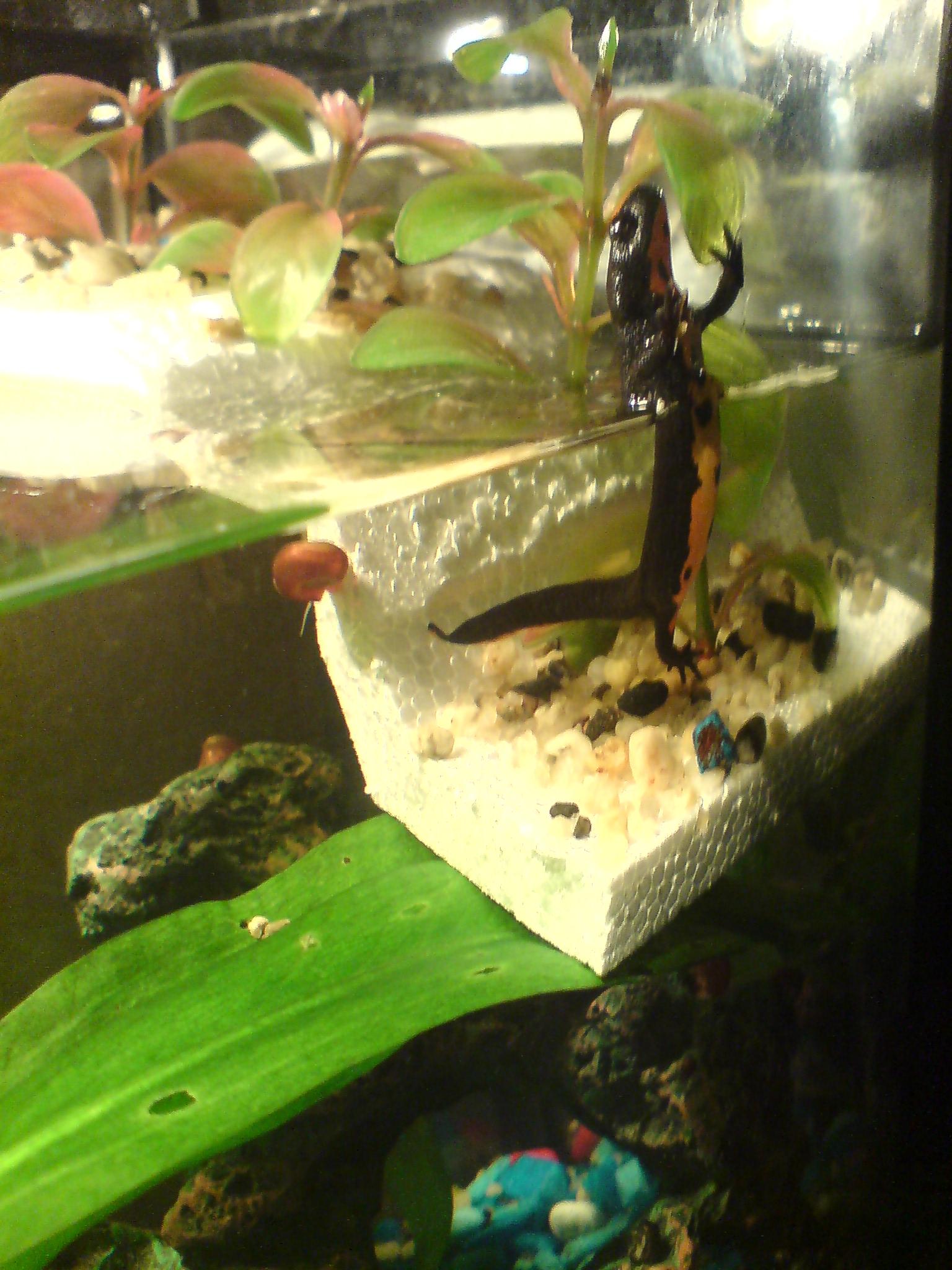 Как смягчить воду в аквариуме 41